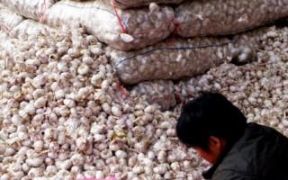 衛報:中國土質惡化 恐爆食物短缺危機