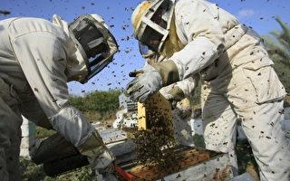 美养蜂业蓬勃发展 助农作物生长