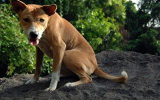 疑中國製造狗食有毒 美國8州聯合起訴