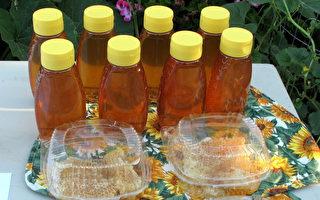 洛杉矶市考虑解禁后院养蜂