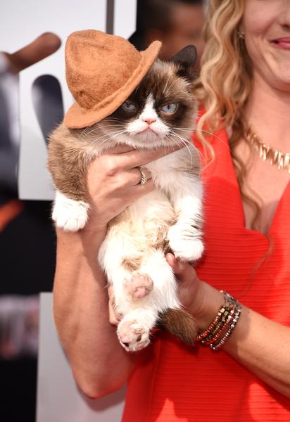 2014年4月13日,网络走红的不爽猫(Grumpy Cat)也现身MTV电影奖颁奖典礼。(Jason Merritt/Getty Images for MTV)