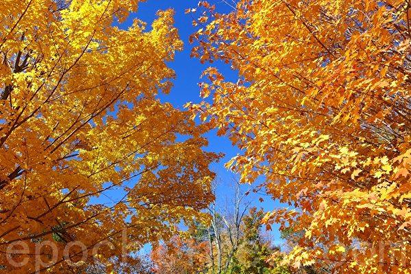 美国东部麻州秋景。(宁静/大纪元)