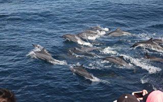 花蓮外海  罕見鯨群大出