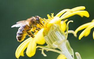 城市养蜂正当时? 细数多伦多养蜂场