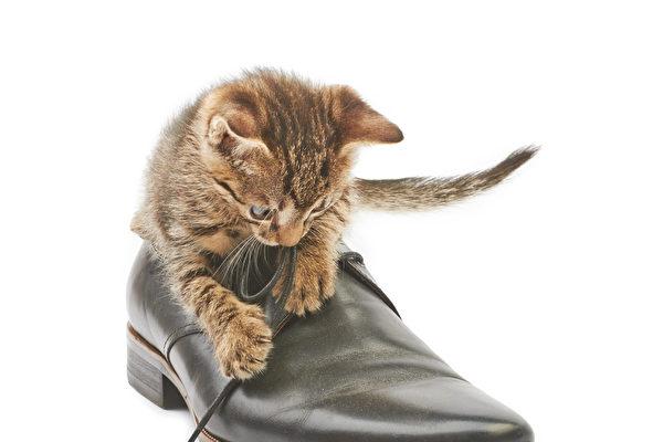 10个最受欢迎英国鞋履品牌+商家优惠跟踪