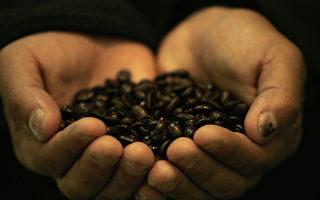 本年度前9月 宏都拉斯咖啡出口成长55%
