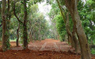花博后里園區  保護原生地  不破壞、只優化