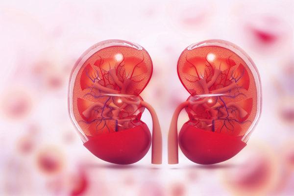 腎功能衰竭,使身體內廢棄物質無法排出體外,可導致全身中毒(尿毒症)。(shutterstock)