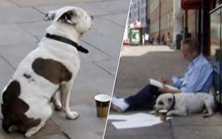 逆转人生 一只狗改变了一名流浪汉的人生
