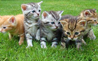 不想「被擺拍」10隻小貓咪趴趴走 主人最後……