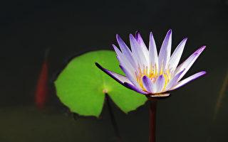 台湾古典诗:清静
