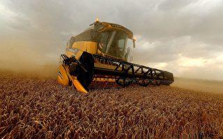 对澳洲大麦做反倾销调查 中共被疑政治报复