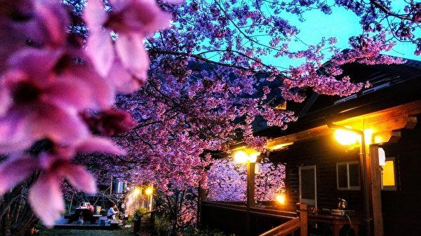 台湾樱花比日本还美? 摄影师推荐赏樱秘境