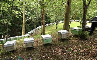 农委会宣布 开放林地合法种菇养蜂