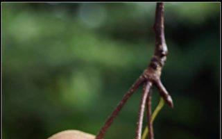 【無魚坊的攝影心視界】糖葫蘆山楂果