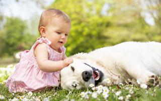 狗狗洗澡洗對了嗎?這樣洗安心又潔淨!