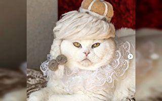 """猫咪脱毛变身""""毛毡帽"""" 猫毛纷飞主人不再愁"""