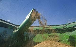 美:中方采购美农产品 达贸易协议目标71%