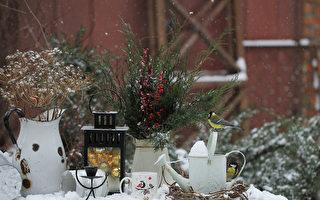 冬季园艺8技巧 帮助植物应对寒冬