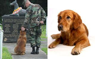 狗狗忠诚赚人热泪!7种为人类贡献一生的工作犬