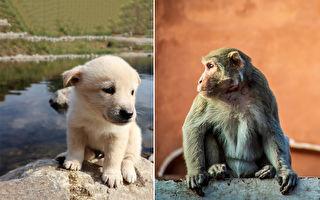 印度母猴收養流浪狗寶寶 民眾驚訝跨種族的愛