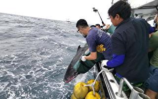 小抹香鲸搁浅桃园海岸  环海同盟基隆外海野放