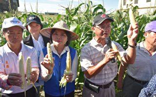 张丽善现勘玉米水稻灾情  吁农友速通报争取救助