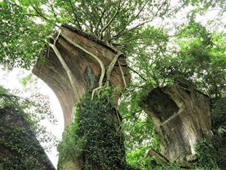 被稱為南段橋的龍騰橋墩隱密在綠樹叢林中。