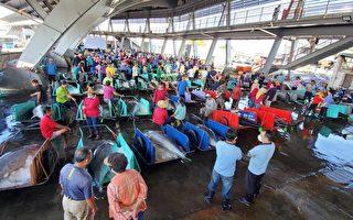 海巡护渔有成  全台黑鲔鱼捕获创新高