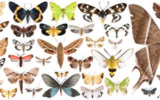 59个新纪录种与8个新种 垦丁蛾类丰富多样