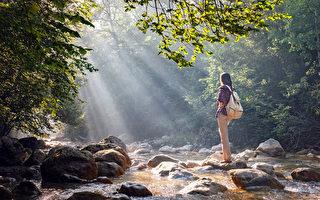 森林浴有抗癌、纾压、提升免疫力等好处。(Shutterstock)