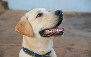 嗅探犬退休 印度警察列队为它送行