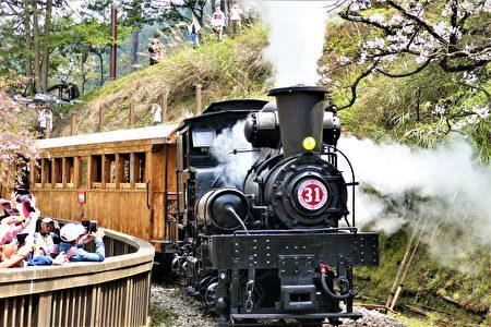 國寶級古董蒸汽老火車頭拉著4節的檜木車廂重出江湖,為每年的花季賞櫻拉開序幕。