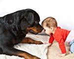 媽媽心裡暖洋洋 寶寶和羅威納犬成好朋友