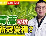 【重播】青蒿素、青蒿能抗变种病毒?